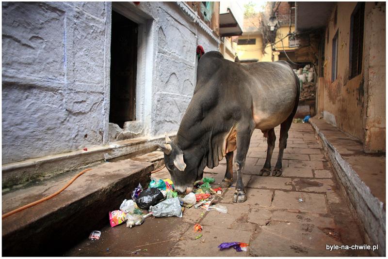 Waranasi miasto