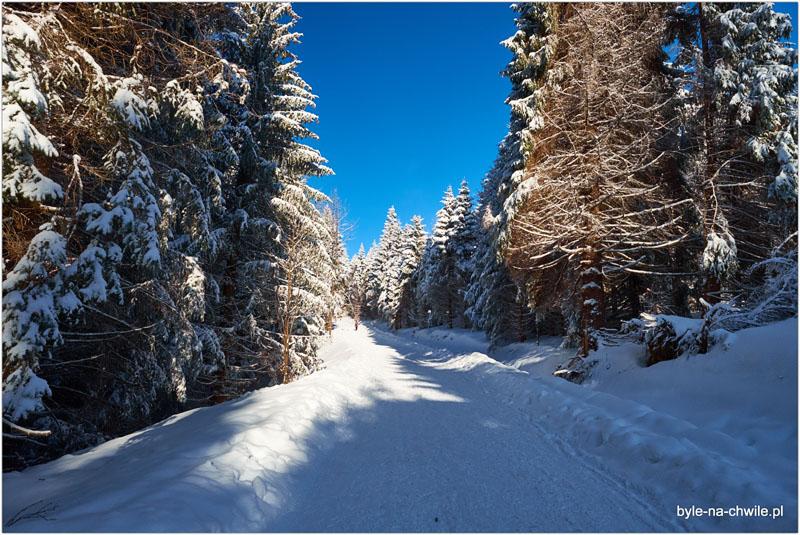 Bachledova Dolina Ścieżka wKoronie Drzew Słowacja