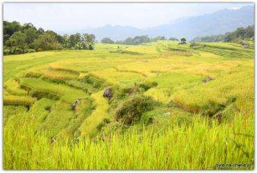 Rantepao Sulawesi Indonezja