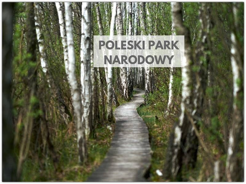 POLESKI PARK NARODOWY BLOG Z DZIECKIEM
