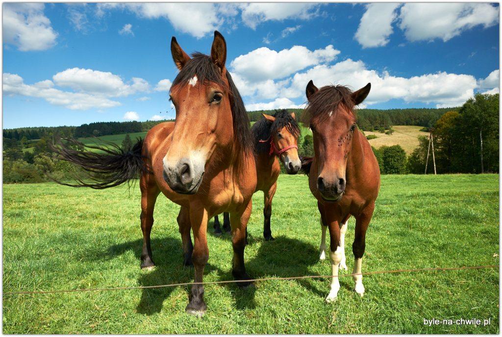 stadnina koni wRegietowie