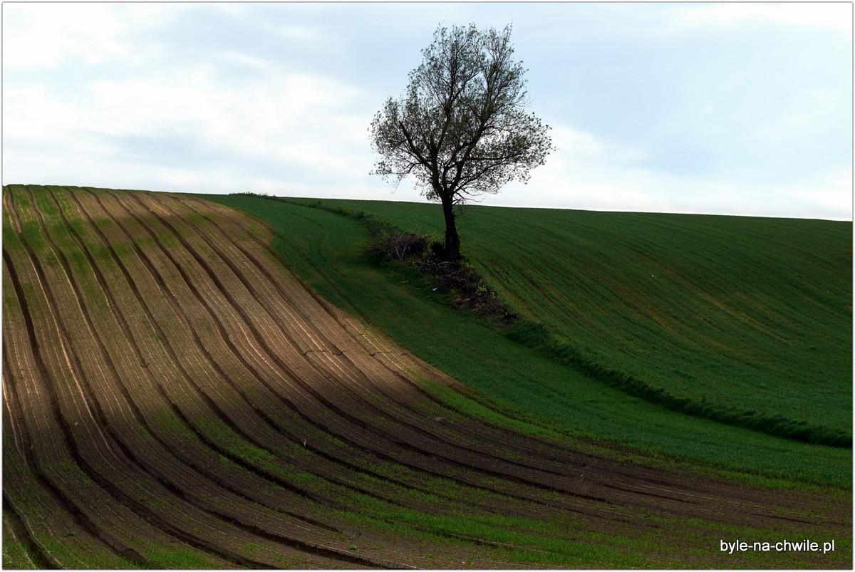 ponidzie pola