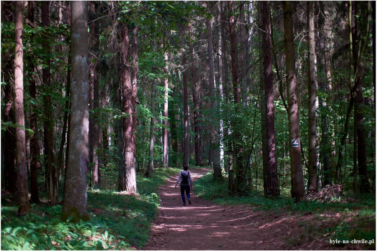 ścieżka Suchary Wigierski Park Narodowy